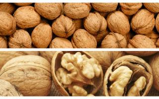 Сколько хранятся грецкие орехи