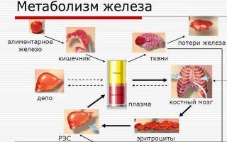 Какие железосодержащие витамины назначают при анемии