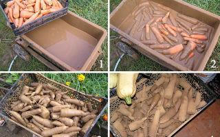 Как и сколько хранить морковь