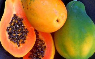 Сколько можно хранить папайю
