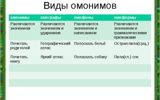 Омонимы: виды и примеры