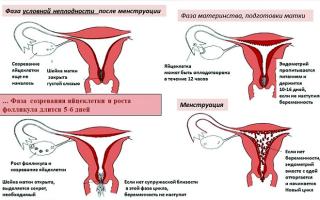 Могут ли прийти месячные, если произошло зачатие?