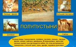 Какие животные живут в полупустынях россии