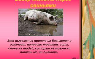 Что означает «метать бисер перед свиньями»