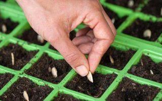 Как посадить семена