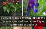 Какие домашние цветы приносят счастье в дом