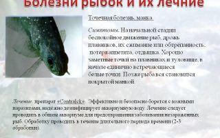 Как лечить манку у рыб