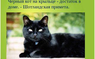 Черная кошка: приметы и суеверия