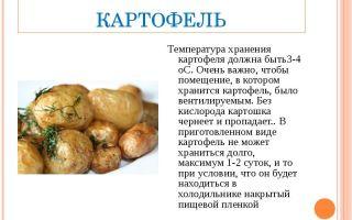 Как и сколько хранить картофель