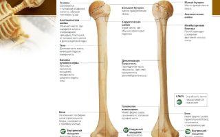 Как определить тяжелую кость