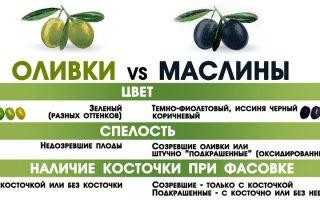 Чем отличаются оливки от маслин
