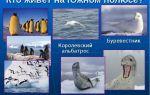 Какие животные живут на южном полюсе