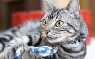Почему кошки мяукают: 10 причин