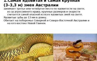 Какие змеи считаются неядовитыми