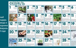 Лунный посевной календарь садовода и огородника на февраль 2018 года