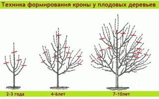Как и когда обрезать плодовые деревья  в 2018 году