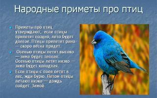 Народные приметы: птица залетела в окно