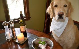 Что делать, если щенок не хочет есть