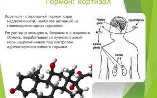 Что такое кортизол