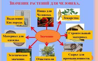 Польза растений для человека